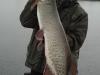 42 inch muskie